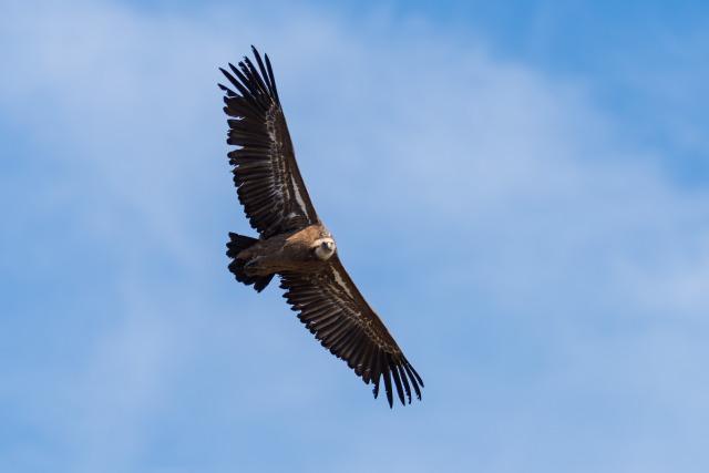 bird-4768652_1920