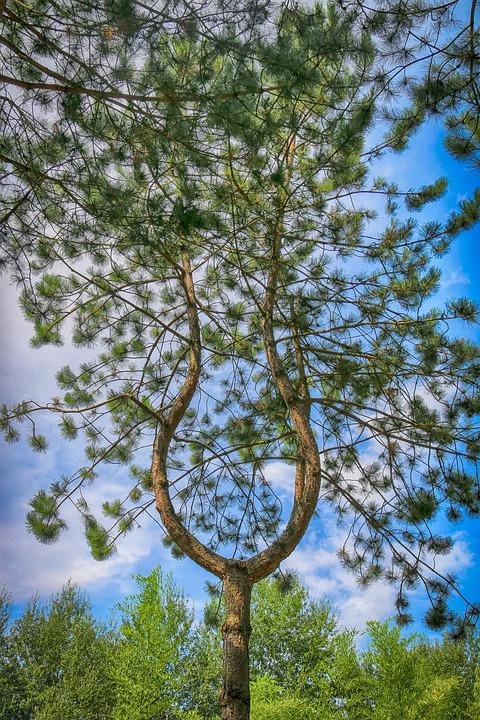 tree-lyre